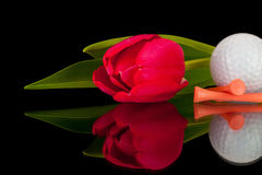 Red tulip and golf equipments Stock Photos
