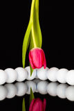 Red tulip and golf equipments Royalty Free Stock Photography