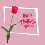 The red tulip with Happy Mother s Day gift card. Royalty Free Stock Images