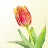 Red tulip on a light background in polygonal style. Illustration on a light background in polygonal style with single red Tulip, located on the right Stock Photo