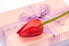 Red tulip on the pink gift box with bow Stock Photo
