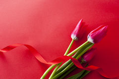 Red tulip and ribbon. Red tulip flower with ribbon on red background Royalty Free Stock Images
