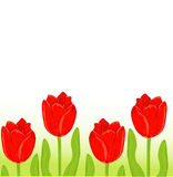 Red tulip spring card Royalty Free Stock Photography