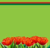 Red Tulip Spring poster. Spring background for greeting card or invitation. Red tulip flowers on green background, pattern stock illustration