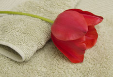 Red tulip on towels stock photos