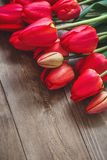 Red tulip. Tulips. Flower background. Flowers photo concept. Holidays photo concept. Copyspace Royalty Free Stock Photography