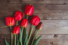 Red tulip. Tulips. Flower background. Flowers photo concept. Holidays photo concept. Copyspace Stock Photo