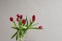 Red tulip in vase. Few red tulip in vase in front of wall Royalty Free Stock Images