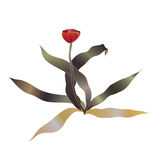 Red tulip vector Royalty Free Stock Photos