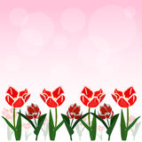 Red tulip vector background. Red tulip and bokeh vector background Stock Images
