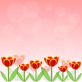 Red tulip vector background. Red tulip and bokeh vector background Stock Image