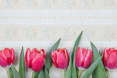 Red tulip vintage postcard Royalty Free Stock Photos