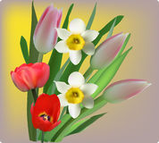 Red tulip and white narcissus flowers on yellow background Stock Photos