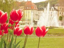 Red Tulipas in a park with fountain royalty free stock photo