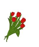 Red tulips. Bouquet of red tulips on a white background Stock Photography