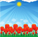 Red tulips. Tulips, sun, sky, grass and clouds Royalty Free Stock Photo