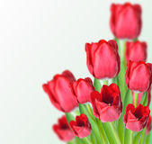 Red tulips. Abstract photo collage of red tulips Stock Photo