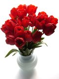 Red tulips. In a white vase royalty free stock photo