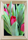 Red tulips. In a frame Stock Image