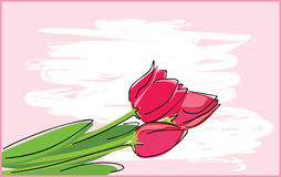 Red tulips. Vector illustration of red tulips Royalty Free Stock Images