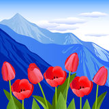 Red tulips against the background of mountains. Vector Illustration. Red tulips against the background of mountains Royalty Free Stock Images