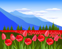 Red tulips against the background of mountains. Vector Illustration. Alpine meadows. Tulip flowers Royalty Free Stock Image