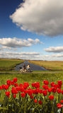 Red tulips against canal in Holland Royalty Free Stock Photos