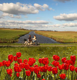 Red tulips against canal in Holland Stock Photo