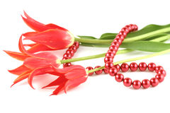 Red Tulips And Bead Royalty Free Stock Photo