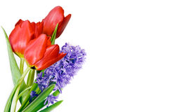 Red Tulips And Violet Hyacinth Stock Photos