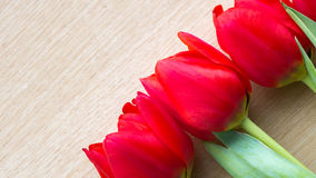 Red tulips arrangement Royalty Free Stock Photos