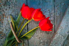 Red tulips on a background of old door. Red tulips on the background of the old door with cracked blue paint Royalty Free Stock Images