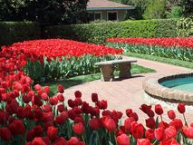 Red tulips and bench. Red tulips surrounding fountain and bench in garden in Concord, North Carolina Stock Photos