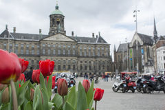 Red tulips on the big square in Amsterdam. Red tulips on the big central square in Amsterdam Stock Photo