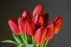 Red tulips on black. Red tulip bunch with leaves on black background Stock Photos