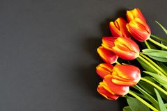Red tulips on the black background. Flat lay, top view. Woman day background stock photos