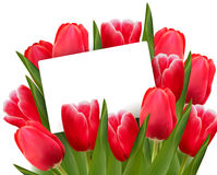 Red tulips and blank of card Royalty Free Stock Images