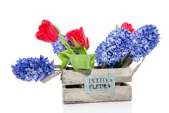 Red tulips and blue Hyacinths Royalty Free Stock Photography