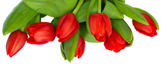 Red tulips border Stock Images