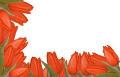 Red tulips border Royalty Free Stock Photos