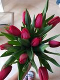Red tulips. Bouquet of red Tulips Royalty Free Stock Image
