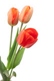 Red tulips bouquet Stock Photography