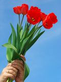 Red tulips bouquet Royalty Free Stock Images