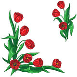 Red tulips bouquet frame Stock Photos