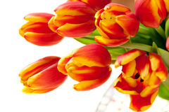 Red tulips bouquet. Stock Photos