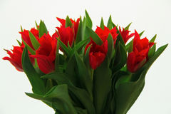 Red tulips. Bouquet of red tulips on a bright background Royalty Free Stock Images