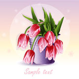 Red tulips in a bucket.  Stock Photo