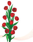 Red tulips bunch Stock Photo