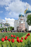Red Tulips at the Cathedral Square - St. Sergius Lavra. Well-maintained grounds of the Holy Trinity - St. Sergius Lavra decorated with colorful tulips in spring Royalty Free Stock Photos