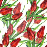 Red tulips of color pencil. Floral seamless pattern. Color pencil red tulip flower bouquet background  handiwork design floral leaf  seamless pattern Stock Photo